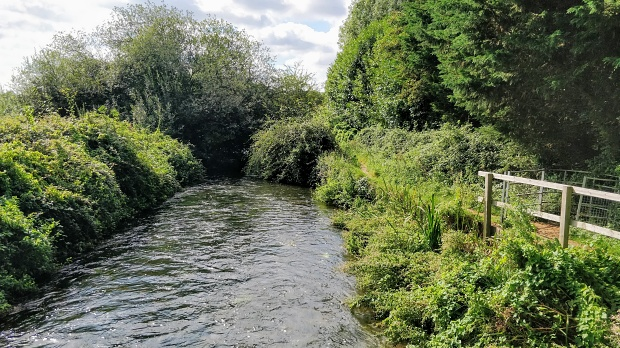 View of the Itchen Navigation, shrubbery and trees