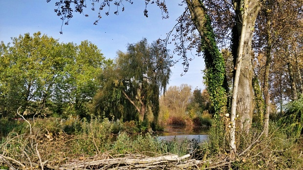 To west of Itchen Way, ponds and trees