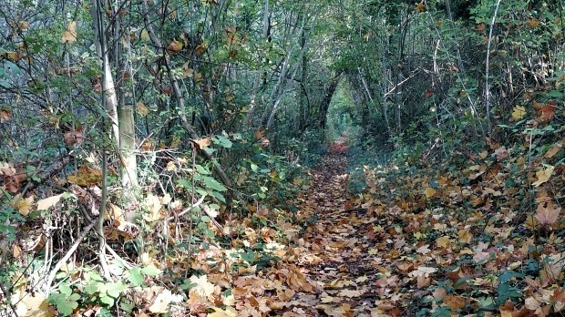 Fallen leaves on path and overhanging trees